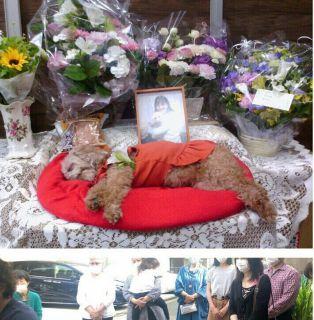 アン▽・w・▽のお葬式